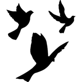 Grupa latające gołębie