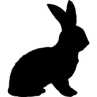 Kształt królika