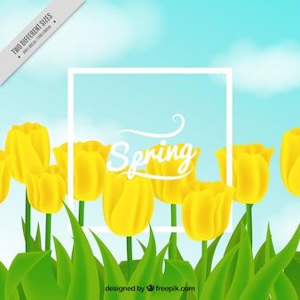 Ładne tło żółte tulipany