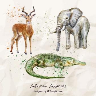 Akwarele ręcznie malowane afrykańskie zwierzęta
