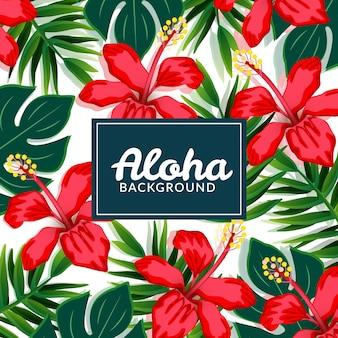 Czerwone kwiaty aloha tle