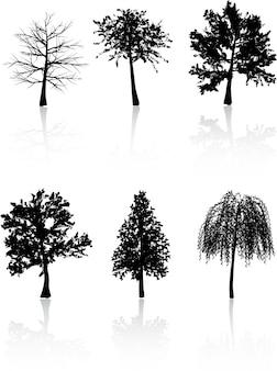 Drzewo sylwetk ?.