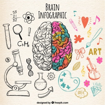 Fantastyczna ludzki mózg infografika o szczegółach kolorystycznych
