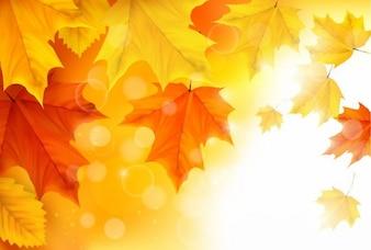 jesienią liści klonu wektor tle ilustracji