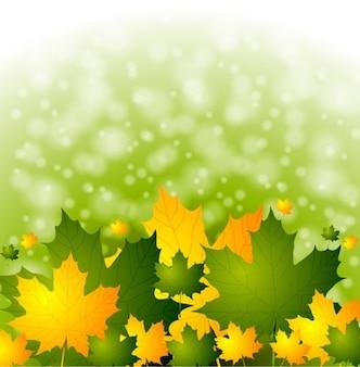 Jesienne liście z zielonym tle bokeh