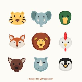 Kolekcja dzikich zwierząt