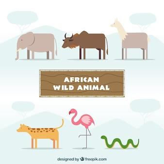 Kolekcja Dzikie zwierzęta