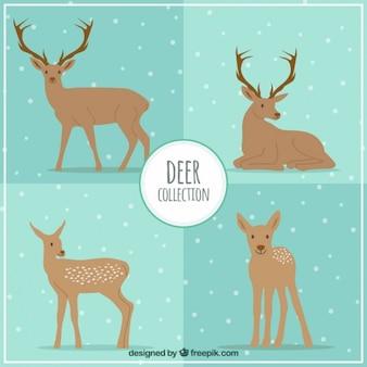 Kolekcja jelenie