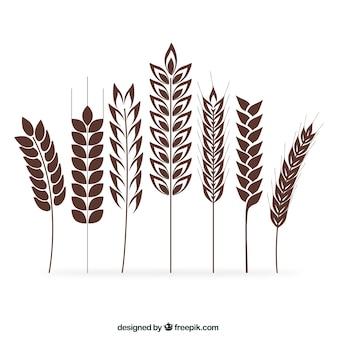 Kolekcja kłosy pszenicy
