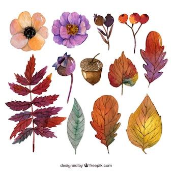 Kolekcja kwiatów i odbarwieniem liści akwarela