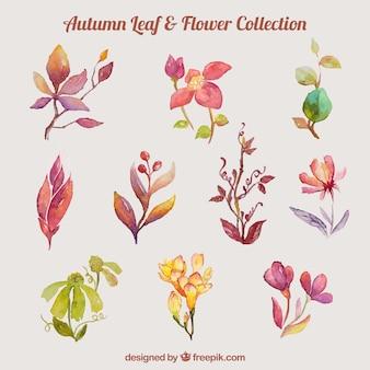 Kolekcja liści akwarelowych i kwiatów