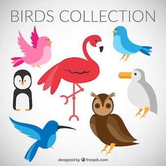 Kolekcja ptaków w stylu płaskiej