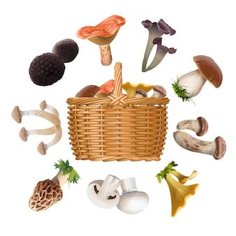 Kolekcja różnych gatunków grzybów jadalnych i kosza