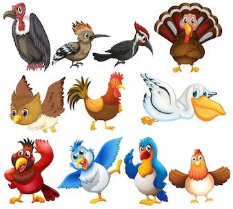 Kolekcje ptaków