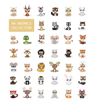 Kolorowe animals collection
