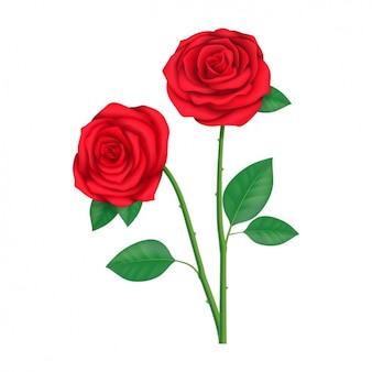 Kolorowe róże wzór