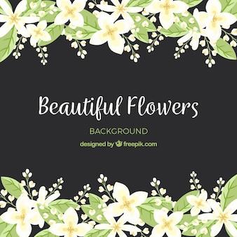 Kolorowe tło z płaskimi kwiatami jaśminu