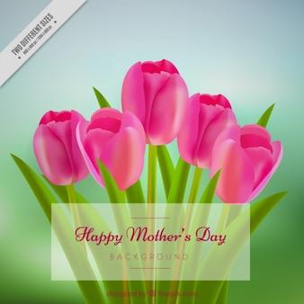 Piękne tulipany na tle mum