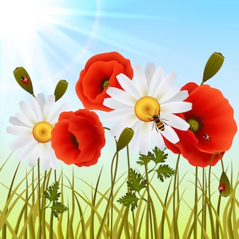 Poppy trawy bez szwu tapety