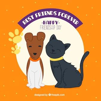 Przyjaźń tle dzień z psem i kotem
