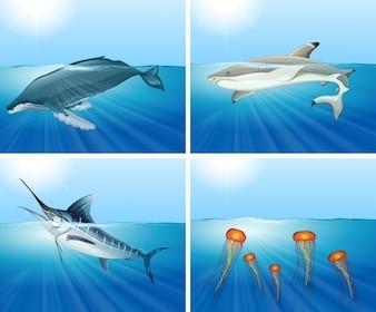 Rekin i inne zwierzęta morskie na ilustracji morza