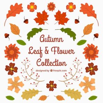 Różnorodność liści jesiennych i kwiatów