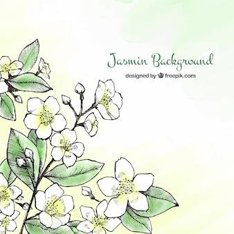 Tła Jasmine z ręcznie narysowanego stylu