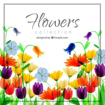 Tło z kolorowych kwiatów