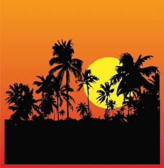 Tropikalna tła sylwetka świt