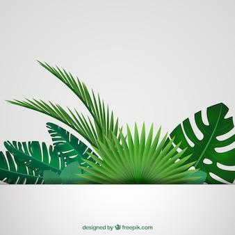 Tropikalnych liści w tle