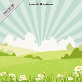 Wiosna krajobraz z Daisies