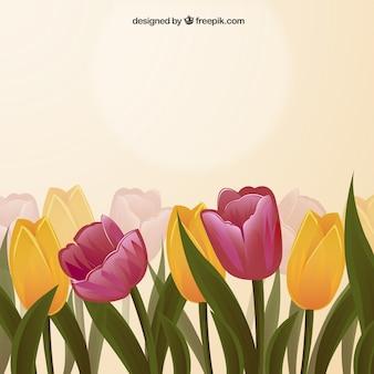 Wiosna tulipany w tle