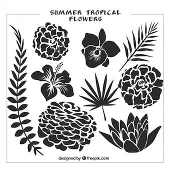 Zestaw czarnych dzikich kwiatów i liści