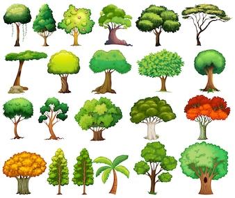 Zestaw drzew