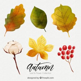 Zestaw jesiennych liści akwarelowych i kwiatów