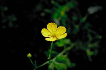 łąka kwiatów kwitną latem kwitnienia