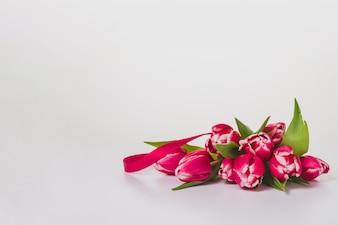 Śliczne tulipany na białym tle