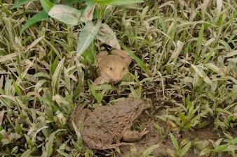 żaba na ziemi