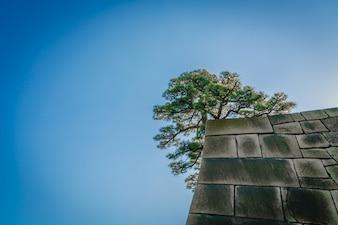 Budynek japoński ogród starożytnej historycznej