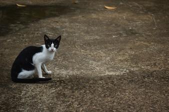 Czarny i biały kot siedzi na drodze