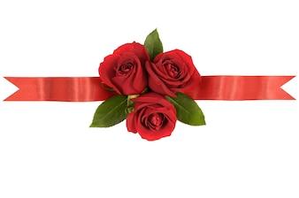 Czerwone róże wstążka banner