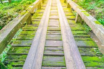 Drewniany most w lesie tropikalnym zielonym mchem.