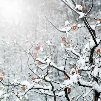 Drzewo słoneczne na zewnątrz niebieski różowy