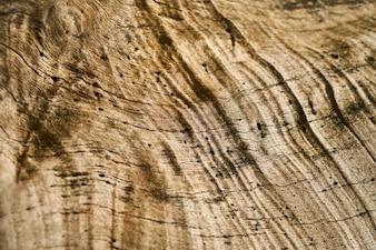 Drzewo Tekstury i Tła