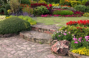 Kolorowy kwiat w ogrodzie