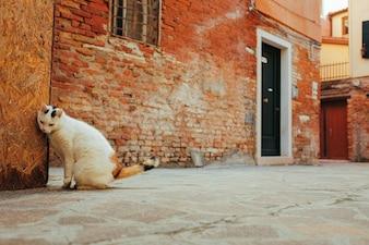 Kot drapie w narożniku budynku