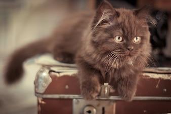 Kot leżący na walizkach