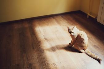 Kot w promienie słońca wpadające przez okno