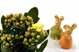 królików wielkanocnych patrząc na kwiat, Wielkanoc