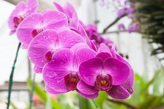 Kwiatowy ogród na zewnątrz fioletowy wyblakły motyl